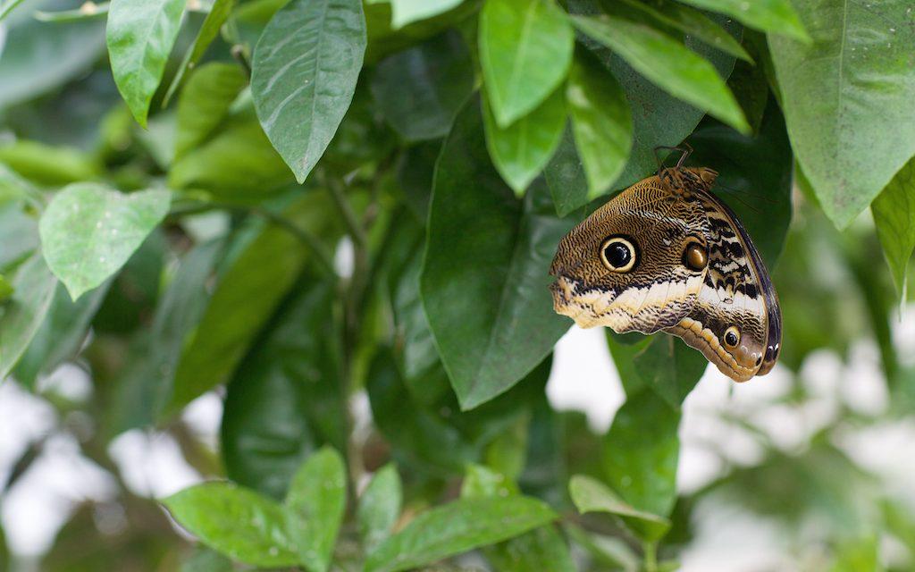 Sensational Butterflies, London