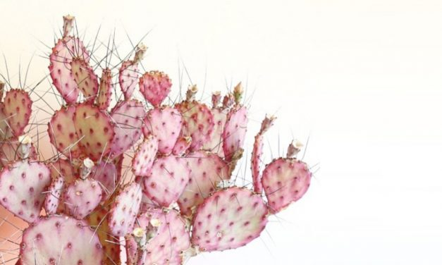 Dreamy summer cactuses