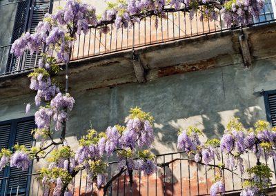 Botanical Garden, Pinanoteca di Brera