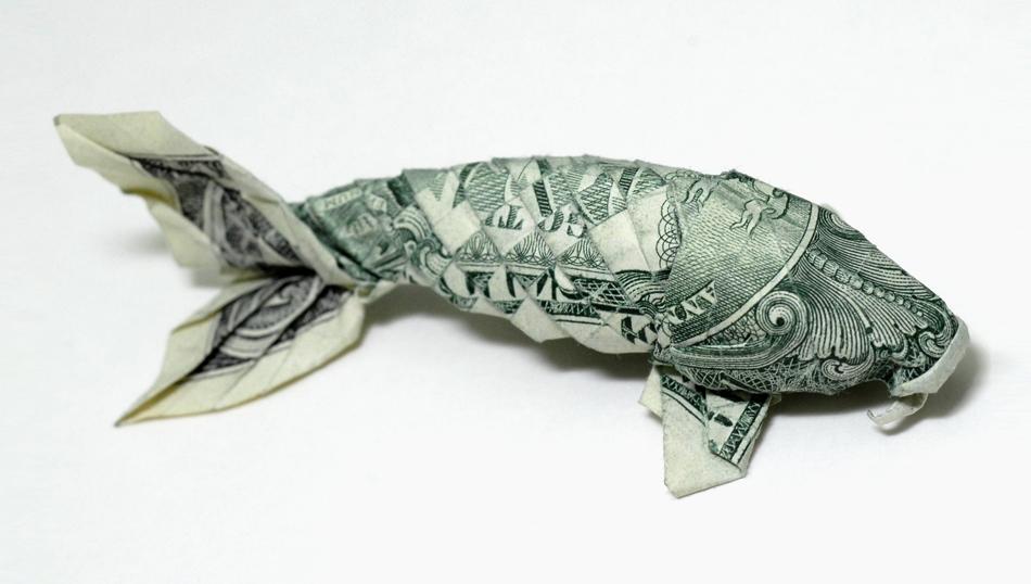 dolar koi