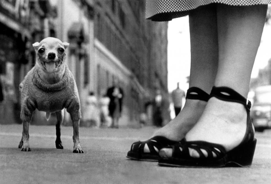 1946 new york by elliott erwitt